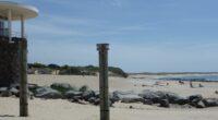 Ce 22 juillet, le conseil communautaire du Pays de Saint-Gilles-Croix-de-Vie a statué sur le devenir du projet de construction d'un port de plaisance à Brétignolles-sur-Mer. Le vote d'arrêt du projet […]