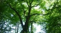 Depuis juillet 2010, le réseau «Forêt» de FNE travaille à la révision de la plateforme de positionnement de FNE sur les questions forestières. L'objectif est de disposer d'une ligne politique […]