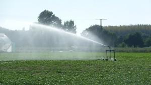 Irrigation - Vallée de l'Authion (49) - source : X. METAY