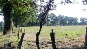 Source : X. Métay - FNE Pays de la Loire - parcelle agricole sur la ZAD de NDDL