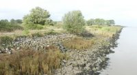 Occupée depuis fin août 2020 par des opposants au projet de zone industrielle, l'île du Carnet dans l'estuaire de la Loire a connu ce matin une intervention des forces de […]