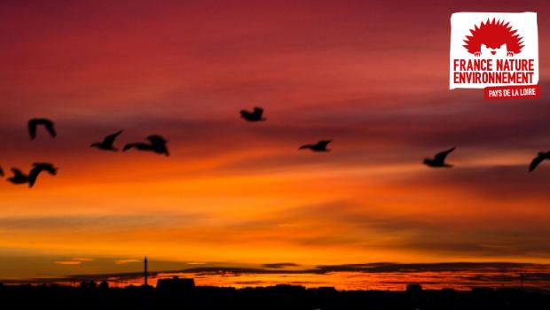 FNE Pays de la Loire agit pour lutter contre la pollution lumineuse. Après avoir engagé certaines actions de sensibilisation en 2020, nous publions un guide à destination des collectivités afin […]