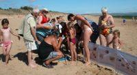 Sales, nos plages ? Il faudrait surtout ne pas confondre «laisse de mer» et vulgaires déchets ! L'association France Nature Environnement Vendée organise une action de sensibilisation des estivants sur […]