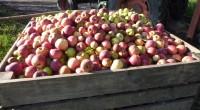 Stéphane Travert, ministre de l'Agriculture, a annoncé le 20 septembre dernier la fin des aides au maintien des exploitants en agriculture biologique. Les associations appartenant au mouvement de France Nature […]