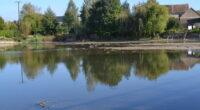 À l'occasion de la Fête de l'Europe, Sarthe Nature Environnement et France Nature Environnement Pays de la Loire ont répondu aux questions de la Maison de l'Europe 72 sur l'état […]