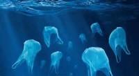 Les sacs plastiques de caisse à usage unique sont interdit à partir du vendredi 1er juillet 2016. C'est une très bonne nouvelle pour l'environnement et en particulier nos océans. Jean-Christophe […]