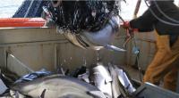 Fin décembre 2019, la préfète de la région Nouvelle-Aquitaine a annoncé ne pas reconduire cette hiver l'autorisation dérogatoire de pêche au chalut pélagique sur le plateau de Rochebonne. Outre l'impact […]