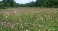 L'État réunit lundi 19 mars un comité de pilotage rassemblant élus et organisations agricoles quant à l'avenir agricole de l'ex-ZAD. Les associations de protection de la nature et de l'environnement[1], […]