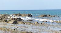 Après une analyse commune avec les associations du mouvement France Nature Environnement, FNE Pays de la Loire considère que le projet de DSF NAMO soumis à la consultation du public […]